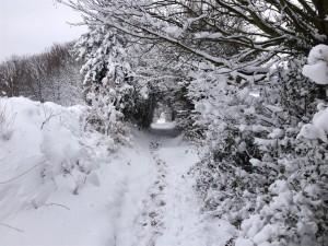 Path to Fairy Land