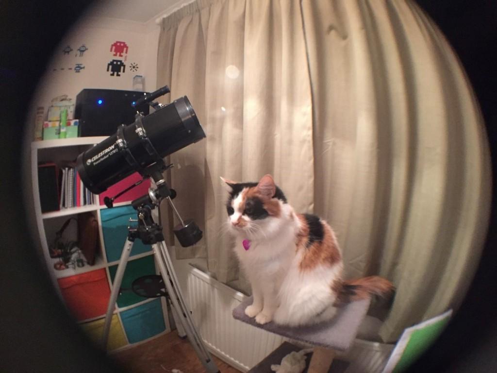 Fifi in fish-eye